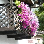 Beautiful Flowers on the Patios