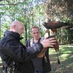 The falconer takes his time to explain all about the hawk.