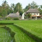 Villa view from rice paddies