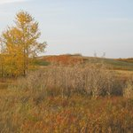Nose Hill Park