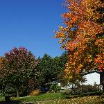  Fall colors along street in Lake Elmo