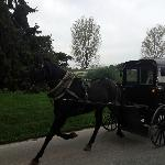 Amish women in Buggy