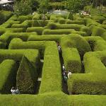 Australia's oldest and most famous traditional Hedge Maze now standing over 3 metres high & 2 me