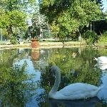  Swans at the Hostellerie de la Source