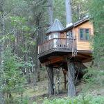 The Calypso Tree House