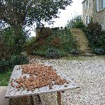 Harvested Walnuts at L'Ombriere