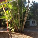 Foto de Rainforest Holiday Village