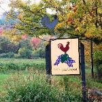 Watts Roost Vineyard