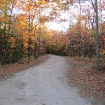 Fall Foliage Drive on Property