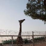 Doha Zoo