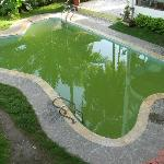  Unhygenic pool