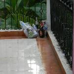 Rubbish lying in the corridors, hotel did not even care to pick them up for 3 days