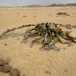 Welwitschia Plains, A Scenic Drive