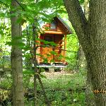 Foto van Deer Creek Bed and Breakfast