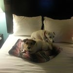 Dog's 1st Hotel Stay