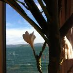 Blooming Frangipani in the Crows Nest
