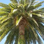 palm tree of the b&b.jpg