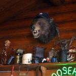  Bear above the bar