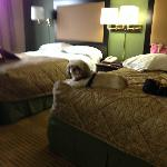 Foto Extended Stay America - Fishkill - Westage Center