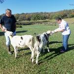 Helping John feed the calves at Old Dr Cox Bed and Breakfast