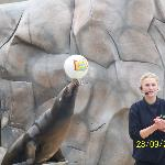  sealion show