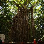 Curtain Fig National Park