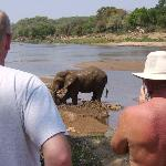 Elephant in Oliphants River at Mfubu Lodge