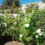 El Paso Municipal Rose Garden