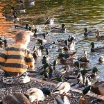 child feeding the ducks