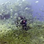 Diving at Caldera Beach