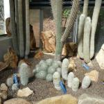  Cacti in the cactus house