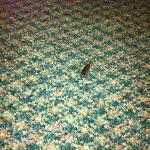  roach I killed in the room next to the bed