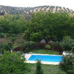  Pool in the back yard. Olive trees in the distance.