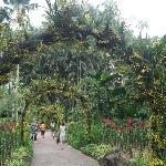 Singapore Botanic Gardens
