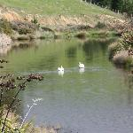 Duckpond on Daisybank tour