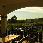 View to the vineyard from the outside dining area