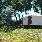  The Woodland Yurt
