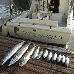 Mystic Amara II - Deep Sea & Bottom Fishing Charters