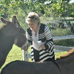 Feeding the SC donkeys