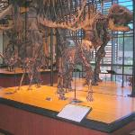 Dinosaurs on Exhibit