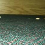 food crumbs and nutshells at front edge of dresser