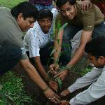 Group Plantation