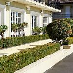 Ibis Styles Albany