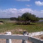  The ranch grounds