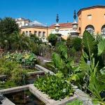 Provided by: The Botanical Garden (Orto Botanico)