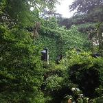  Cool house nextdoor covered in ivy