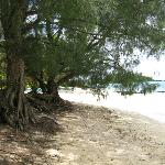  Beach in front of house, sandy and shade