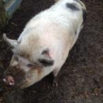 Rare Breeds & Children's Farm
