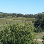  View from back deck - vineyard - photo taken in late Oct 2012