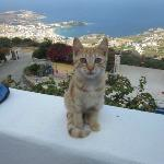 one of the many kittens o our terrace